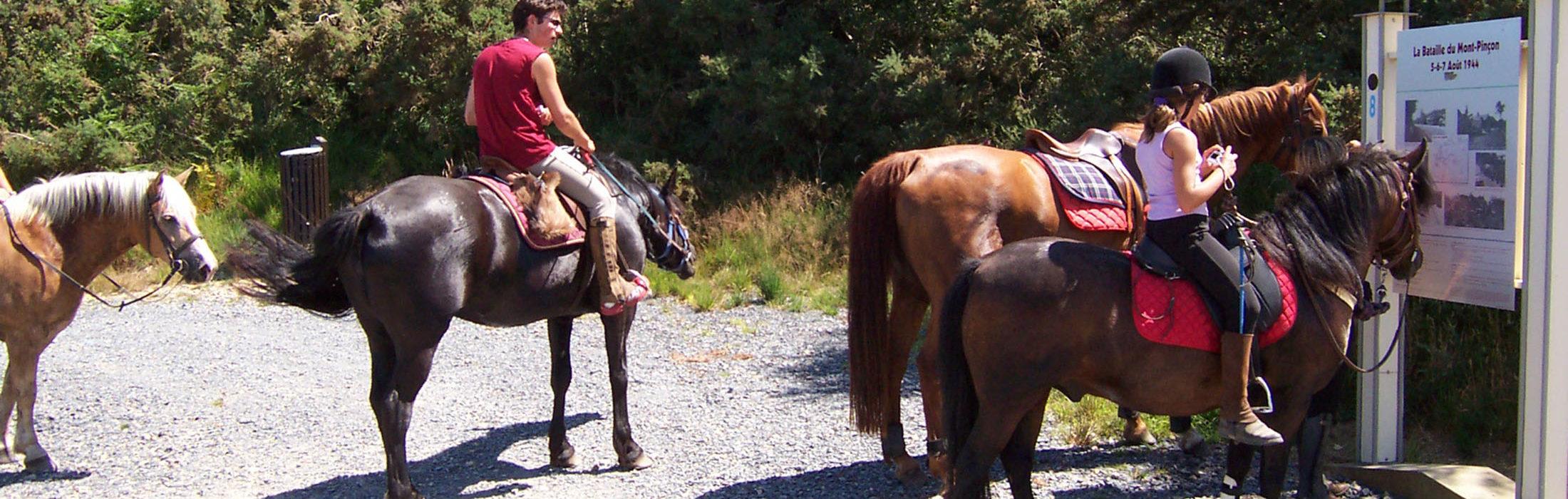 Découvrir les nombreux centres équestres, parcourir à cheval une boucle ou un itinéraire, assister à une course hippique dans un hippodrome, le cheval 1