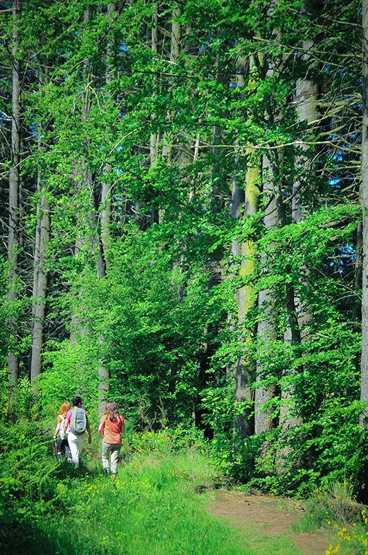 Une belle randonnée au coeur de la forêt de Saint Sever