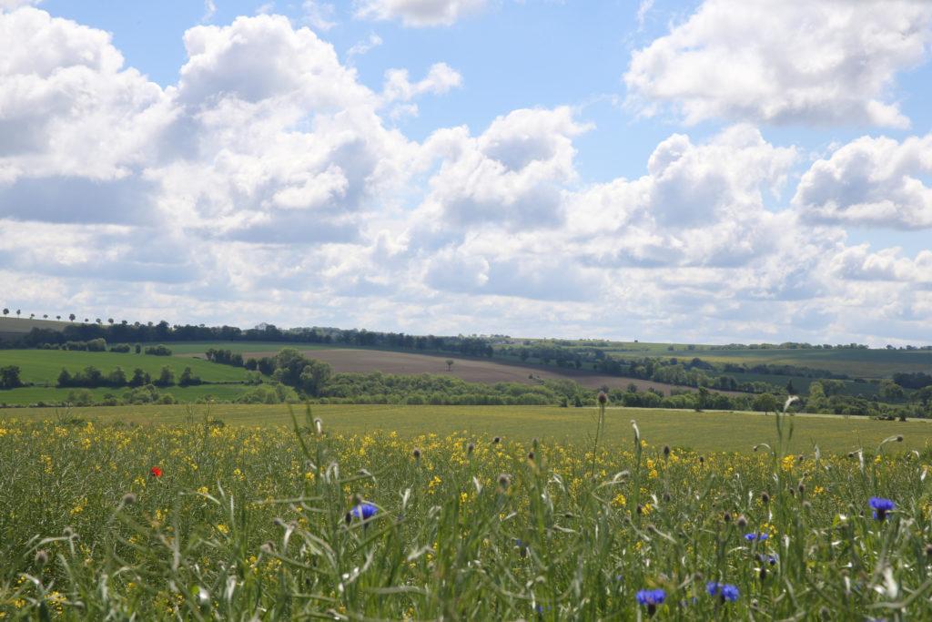 Panorama sur la campagne du Pays de vire, champ fleur et collines bocagères